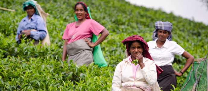 Laughing Tea Pickers